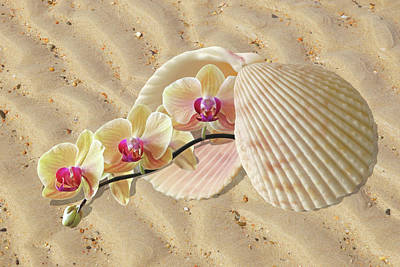 Orchids And Shells On The Beach Poster by Gill Billington