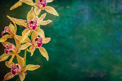 Orchids Poster by Elena E Giorgi