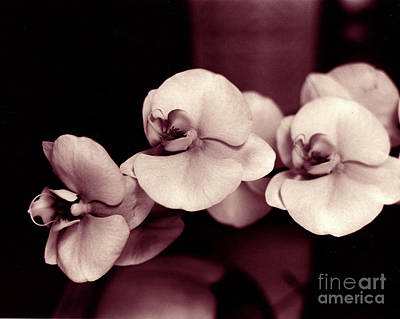 Poster featuring the photograph Orchids Hawaii by Mukta Gupta
