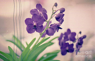 Poster featuring the photograph Orchids In Purple  by Ana V Ramirez