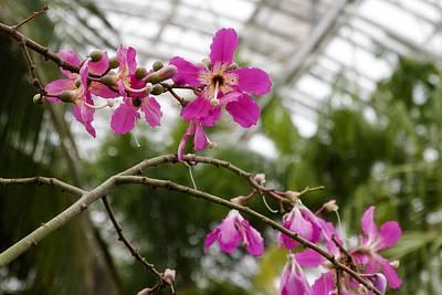 Orchids Myriad Botanical Gardens Okc Poster