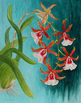 Orchids - Volcano Queen Poster by Kerri Ligatich