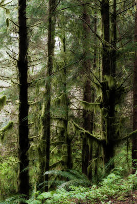 Oregon Old Growth Coastal Forest Poster