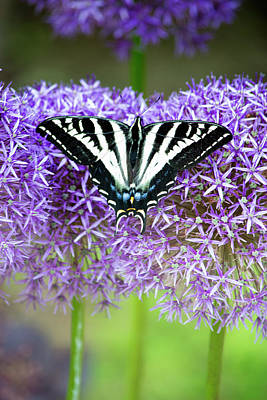 Poster featuring the photograph Oregon Swallowtail by Bonnie Bruno