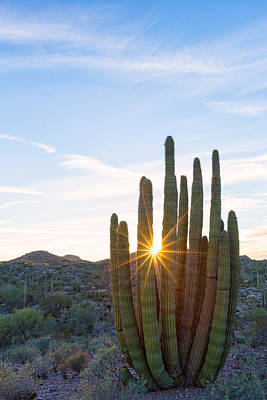 Poster featuring the photograph Organ Pipe Cactus by Patricia Davidson