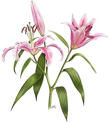 Oriental Lily Stargazer Poster
