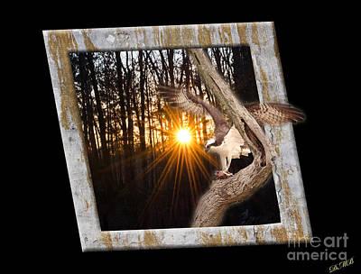 Osprey At Sunset  Black Poster