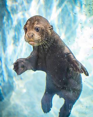 Otter Cuteness Poster by Jamie Pham
