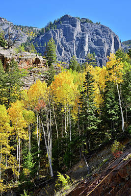Poster featuring the photograph Ouray Aspens by Ray Mathis