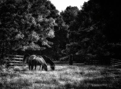 Poster featuring the photograph Out To Pasture Bw by Mark Fuller