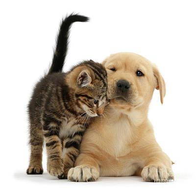 Over Friendly Kitten Poster