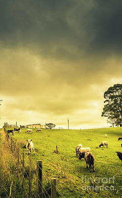 Overcast Sky Above Herd Of Cows On Pasture Poster