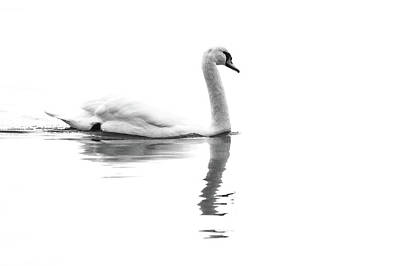 Overcast Swan Poster by Jim Nelson