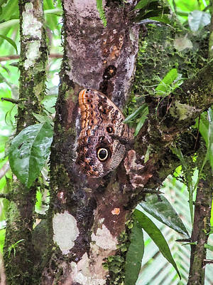 Owl Butterfly On A Tree Poster