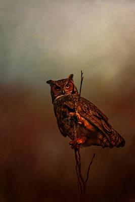 Owl In The Marsh Poster