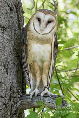 Owl Poster by Juli Scalzi