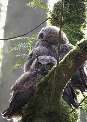 Owl Morning Poster