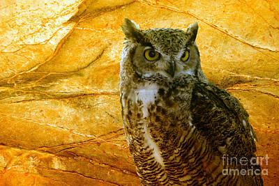 Owl Poster by Teresa Zieba