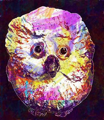 Owl White Weel Sound Close Up Bird  Poster