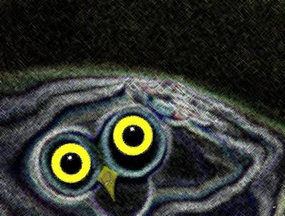 Owly Poster by Will Borden