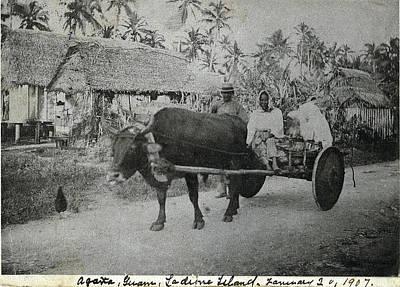 Ox Cart Guam 1907 Poster