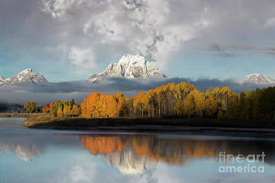 Oxbow Bend Majestic Reflection Poster by Wildlife Fine Art