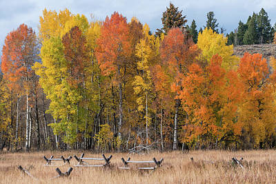 Oxbow Fall Colors Poster