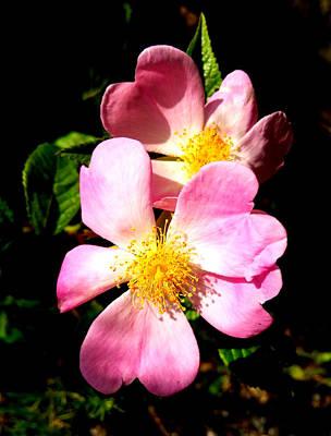 Ozark Wild Roses Poster by Lesli Sherwin