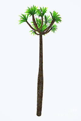 Pachypodium Lamerei Tall Tree Poster by Corey Ford