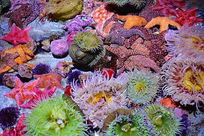 Pacific Ocean Reef Poster