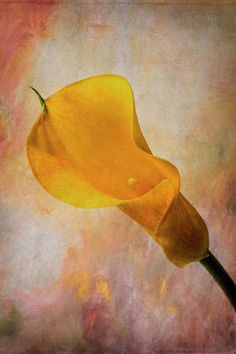 Painted Calla Lily Poster by Garry Gay