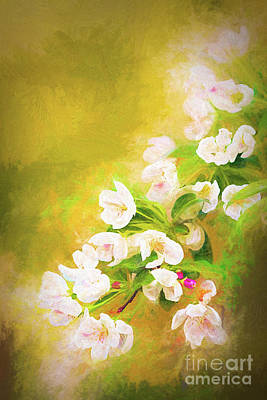 Painted Crabapple Blossoms In The Golden Evening Light Poster