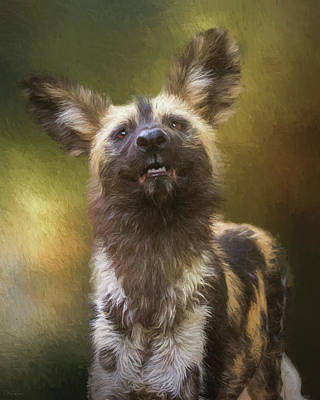 Painted Dog Portrait Poster