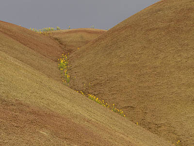 Painted Hills Balsam Poster by Jean Noren