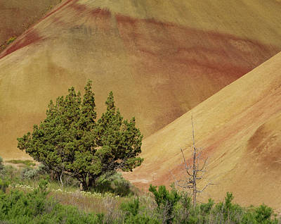 Painted Hills Trees Poster by Jean Noren