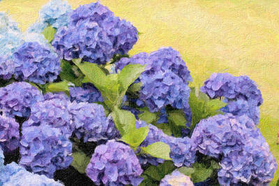 Painted Hydrangeas Poster