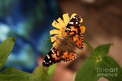 Poster featuring the photograph Painted Lady Butterfly by Eva Kaufman