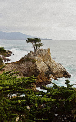 Painting Lone Cypress Monterey Poster by Barbara Snyder