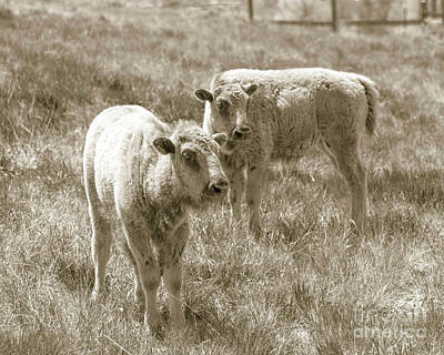 Poster featuring the photograph Pair Of Baby Buffalos by Rebecca Margraf