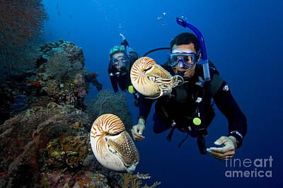 Palau Underwater Poster by Dave Fleetham - Printscapes