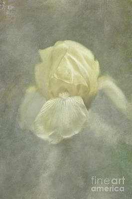 Poster featuring the digital art Pale Misty Iris by Lois Bryan