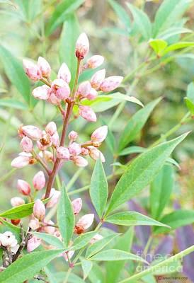 Pale Powder Pink Plant Poster