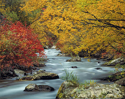 Palisades Creek Poster