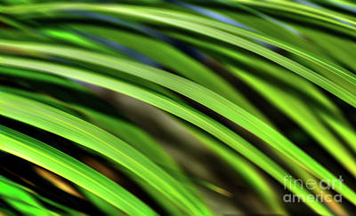 Poster featuring the photograph Palm Abstract By Kaye Menner by Kaye Menner