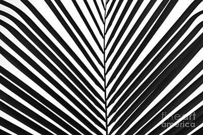 Palm Art Poster by Peter Jamieson
