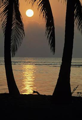 Palm Fronds And Sunset Over Caribbean Poster