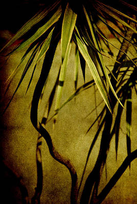 Palm Fronds Are Green Poster by Susanne Van Hulst
