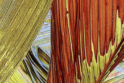 Palm Leaf Abstract Poster by Ben and Raisa Gertsberg