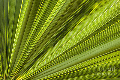 Palm Leaf Abstract Poster
