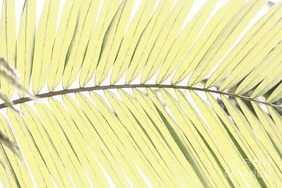 Palm Leaf Poster by Gaspar Avila